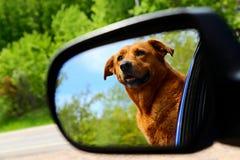 Hund, der heraus Rückspiegel steht Stockfoto