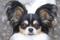 Hund, der heraus Zunge haftet Lizenzfreie Stockfotografie