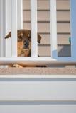 Hund, der hinter Geländer sitzt Stockfotos