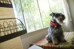 Hund, der im Fenster sitzt stockfotografie