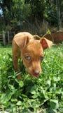 Hund, der im Garten spielt Stockfoto