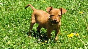 Hund, der im Garten spielt Lizenzfreie Stockfotografie