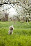 Hund, der im Gras sitzt Stockbild