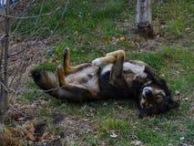 Hund, der im Gras stillsteht Stockbilder