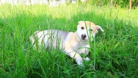 Hund, der im Grasvideo spielt stock video