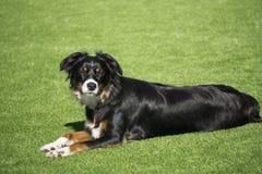 Hund, der im Hinterhof niederlegt stockbild