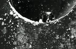 Hund, der im konkreten Tunnel liegt Schwarzweiss-Porträt von nettem älterem Border collie Schneien: Sichtbare Schneeflocken lizenzfreie stockfotos