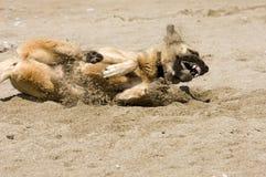 Hund, der im Sand spielt Stockbild