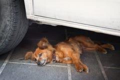 Hund, der im Schatten des Autos liegt Stockfoto