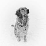 Hund, der im Schnee sitzt Lizenzfreies Stockfoto