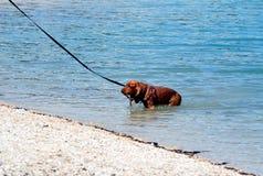 Hund, der im See spielt Lizenzfreies Stockbild