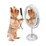 Hund, der im Spiegel sich pflegt Lizenzfreie Stockbilder