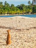 Hund, der im Strand kühlt Lizenzfreie Stockfotografie