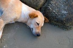 Hund, der im Strand schläft Lizenzfreie Stockfotos