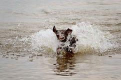 Hund, der im Ton spielt lizenzfreie stockfotografie