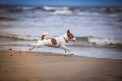 Hund, der im Wasser spielt Lizenzfreie Stockbilder