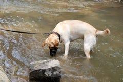 Hund, der im Wasser spielt stockfoto