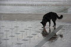 Hund, der im Wasserbrunnen spielt Stockfotografie