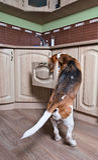 Hund in der Küche Stockbild