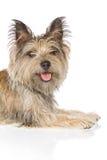 Hund, der Kamera betrachtet lizenzfreies stockbild