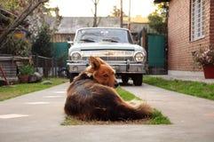 Hund, der Kamera gegenüberstellt Stockfotografie