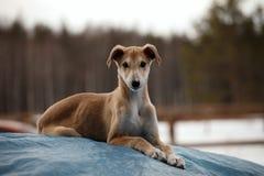 Hund in der Krippe Lizenzfreies Stockbild