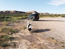 Hund, der Kugel jagt Lizenzfreie Stockfotografie