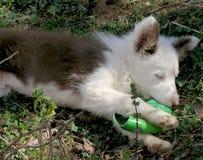 Hund, der Kugel spielt Stockfotos
