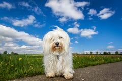 Hund in der Landschaft Lizenzfreie Stockfotos