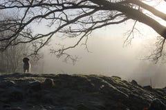 Hund in der Landschaft von Schweden Lizenzfreies Stockbild