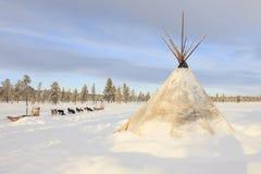 Hund, der in Lappland rodelt lizenzfreies stockfoto