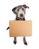 Hund, der leeres Pappzeichen hält Stockbild