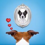 Hund in der Liebe Stockfoto