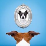 Hund in der Liebe Stockbild