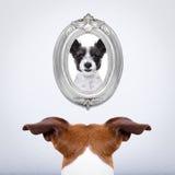Hund in der Liebe Lizenzfreies Stockbild