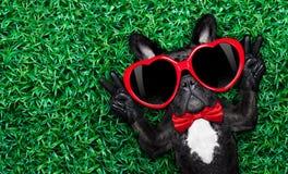 Hund in der Liebe auf Gras Stockfoto