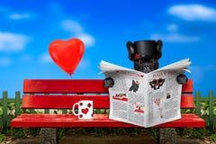 Hund in der Liebe, die auf einer Bank sitzt stockfotografie