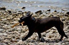 Hund, der in Meer spielt lizenzfreies stockfoto