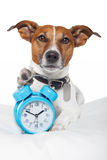 Hund, der mit Alarmuhr und Schlafenschablone schläft Stockfotografie