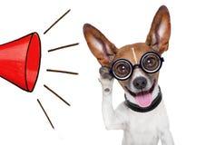 Hund, der mit dem gro?en Ohr h?rt lizenzfreie stockfotografie