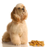 Hund, der mit den Hundeknochen sitzt Stockfoto
