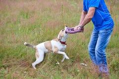 Hund, der mit einer Wirt Wiese spielt Stockbild