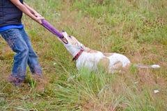 Hund, der mit einer Wirt Wiese spielt Stockfotos