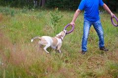 Hund, der mit einer Wirt Wiese spielt Lizenzfreies Stockfoto