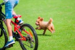Hund, der mit Kind spielt Lizenzfreie Stockfotografie