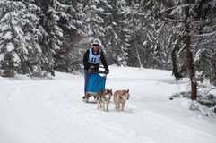 Hund, der mit Schlittenhunden rodelt Lizenzfreie Stockfotos