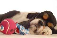 Hund, der mit Spielzeug schläft Lizenzfreie Stockbilder