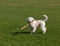 Hund, der mit Steuerknüppel spielt stockfoto
