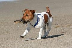 Hund, der mit Steuerknüppel spielt stockbild