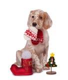 Hund, der mit Weihnachtsflitter sitzt,   Lizenzfreies Stockfoto